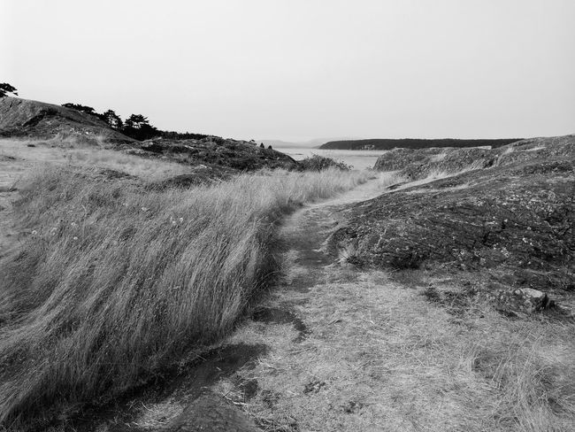 Grassy path. Outdoors Nature Scenics Horizon Over Water Beauty In Nature Water No People Sea Landscape San Juan Island San Juan Islands Beauty In Nature Rock - Object Paths Less Travelled Rocky Coastline Black & White Mate 9 Breathing Space