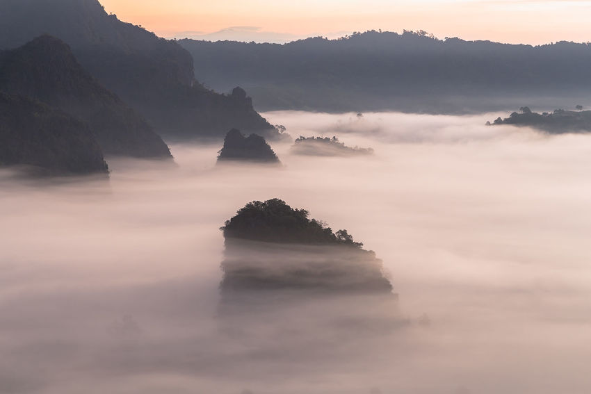 The Mist and Sunrise Time with Maxican SunFlower, Landscape at Phu Langka, Payao Province, Thailand Beautiful Blackground Camping Family Light Morning Phu Langka Thailand Yoka Amazing Camp Colorful Flower Fog Landscape Light And Shadow Maxican Sunflower Mist Mountain Park Payao  Sun Sunrise View Point Women