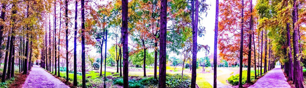 We Have Taken Some Nice Scenery In The Riverside Forest Park In Shanghai. We Have Seen Different Views Through The Forest Tree Tree Trunk Beauty In Nature Nature Growth Scenics EyeEmNewHere