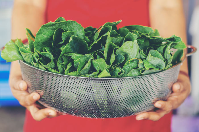 Kale Vegetable In the hands of the farmer Agriculture Farm Farmer Farmland Green Leafs Plant Agriculturist Crop  Cultivator Foliage Food Freshness Harvest Healthy Eating Holding Kale Leaf Leaves Organic Product Reap Stalk Vegetable Vegetables
