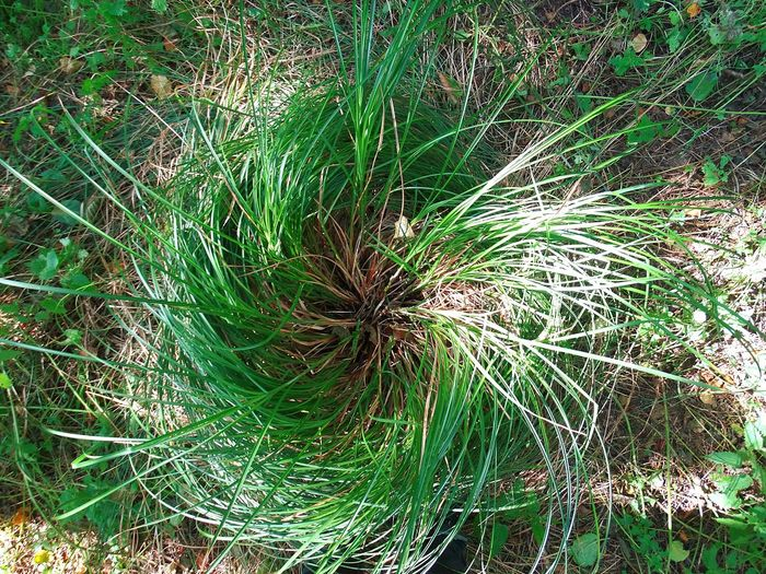 Grass swirl. Full Frame Close-up Growth Plant Nature Green Color Beauty In Nature Outdoors Grass Swirl From My Point Of View Check This Out Nature Calm Shadow Chris Drury