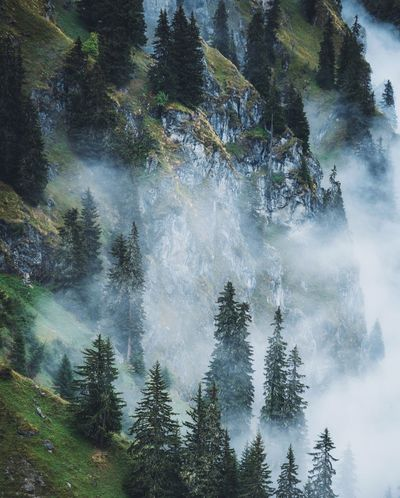 Misty morning. Landscape Mountain Switzerland VSCO Tree Plant Growth Beauty In Nature Low Angle View Nature Forest Tranquility Day No People Scenics - Nature Sky Land Outdoors Tranquil Scene Green Color Motion Water Non-urban Scene Coniferous Tree The Week On EyeEm Editor's Picks