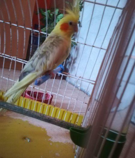Sea First Eyeem Photo#Bird #birds #InstaTags4Likes #parrot #parrots #birdsofinstagram #birding #animal @appslejandro #birdwatching #loveit #igbirdfreaks #beautiful #bird_lovers #instabird #instaparrot #feather #sky #bestbirds #birdstagram #wings #cockatiel #macaw #parakeet #am