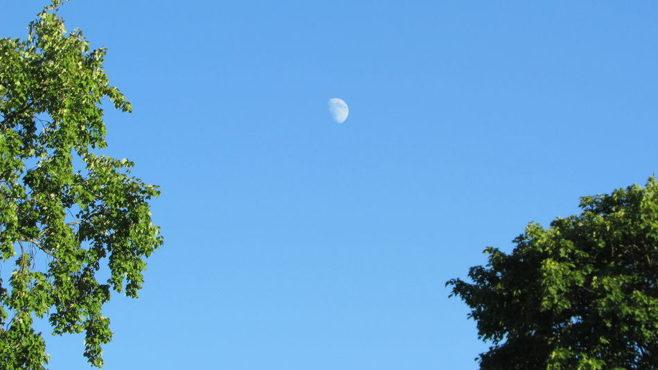 Day Moon Late Evening Sky Sunshine Enjoying Life From A Distance Cadillac Sky Pure Michigan