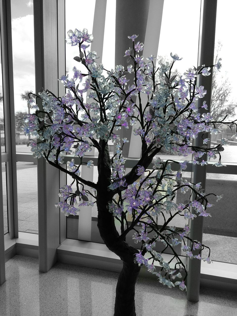 growth, flower, nature, blossom, no people, window, plant, beauty in nature, spring, indoors, branch, tree, day, architecture, fragility, freshness