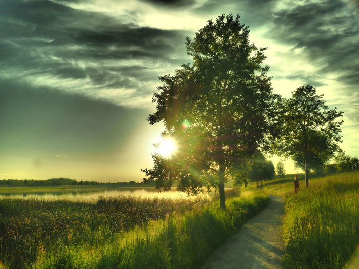 Beauty In Nature Cloud Cloud - Sky Cloudy Field Grass Grassy Growth Idyllic Landscape Lens Flare Nature Outdoors Plant Rural Scene Scenics Sky Sun Sunbeam Sunlight Sunset The Way Forward Tranquil Scene Tranquility Tree