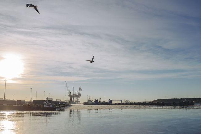 Flying Birds in Port Backlight Bird Flying Bird Ice Insdustrial Lithuania Morning Port Seagulls Seagulls And Sea Sunrise Transportation Winter