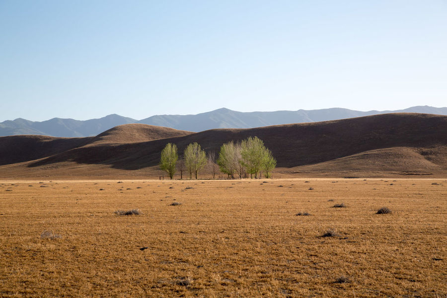 Arid Climate Clear Sky Copy Space Day Desert Drought Geology Horizon Over Land ISO Landscape Mountain Mountain Range Non-urban Scene Outdoors Physical Geography Remote Scenics Tranquil Scene Tranquility Tree