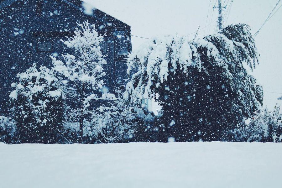 寒いね Canonphotography Canoneos8000d VSCO Winter Snow
