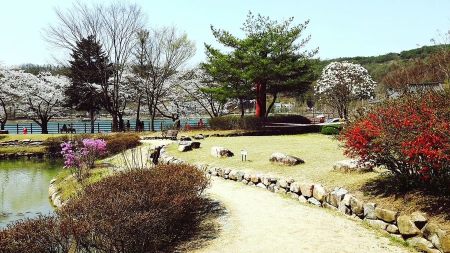 Springtime Tree Day Outdoors Nature Growth Water No People Beauty In Nature Sky Flower Freshness Gyeongsangbukdo Andong,korea Tourist Attraction  Lost In The Landscape Connected By Travel EyeEmNewHere Animal Themes Large Group Of People Mammal Real People Bare Tree Grass Clear Sky People