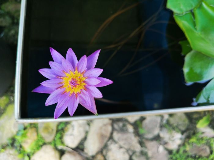 Close-up of pink flower floating on water