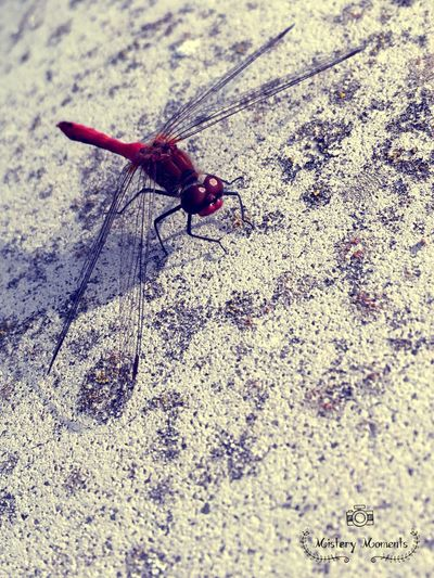 Dragonfly ♥️ Dragonfly Insect Insect Photography Nature Nature Photography EyeEm Nature Lover EyeEm Best Shots Eye4photography