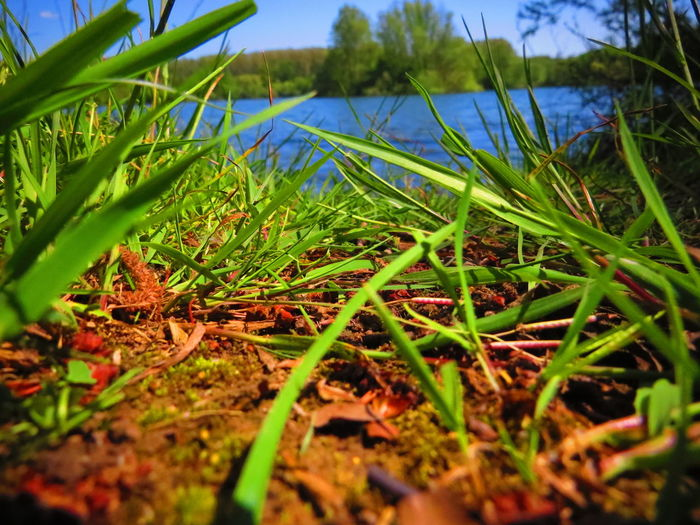 Beauty In Nature Blue Close-up Focus On Foreground Grass Green Growing Idyllic Landscape Leaf Lonely Lake Nature Outdoors Plant Remote Scenics Selective Focus Surface Level Thinking About Life Thoughtful Tranquil Scene Tranquility Water