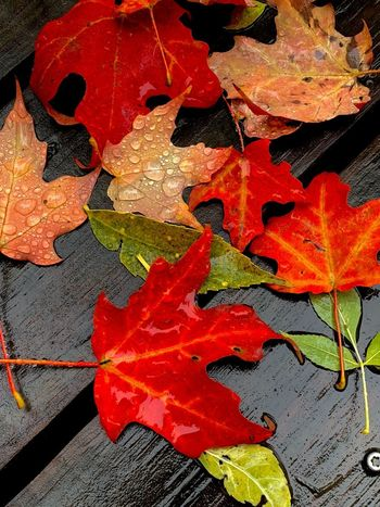 Full Frame No People Leaf Backgrounds Close-up Plant Part Multi Colored Day Red Outdoors Autumn High Angle View