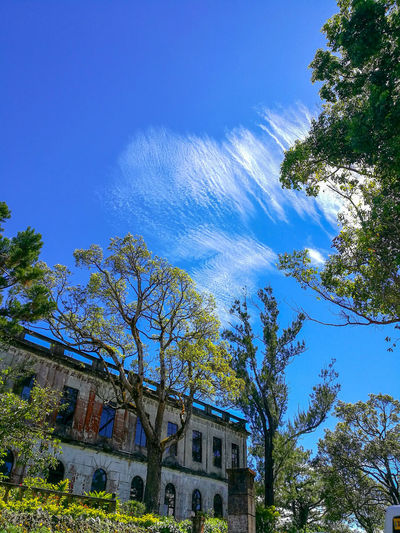 Trees are poems that the earth writes upon the sky. - Khalil Gibran The Still Life Photographer - 2018 EyeEm Awards Tree Blue Sky Architecture Building Exterior Built Structure