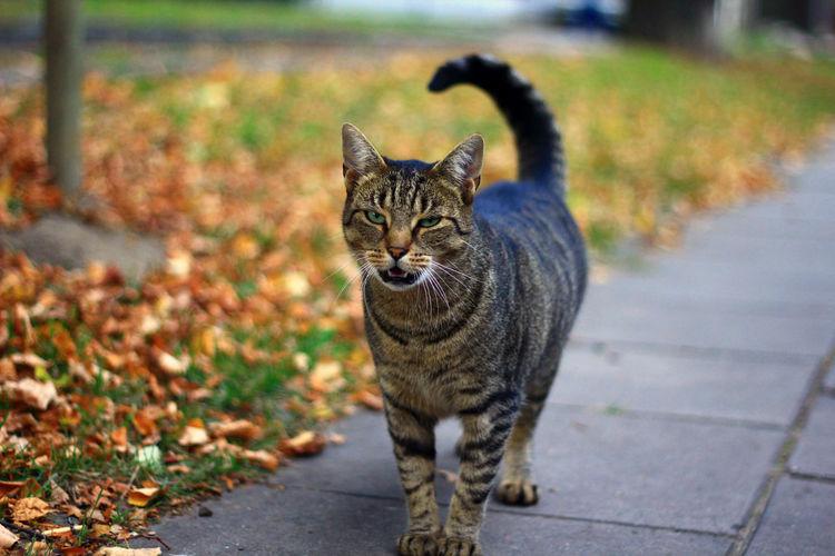 Cat Cat♡ Kitten Animals Catlover Catlovers Meow Catstagram