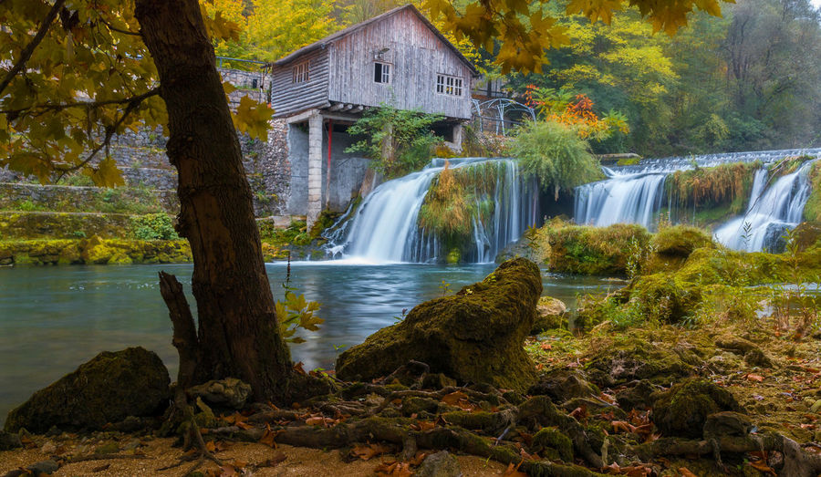 Scenic view of waterfall by trees