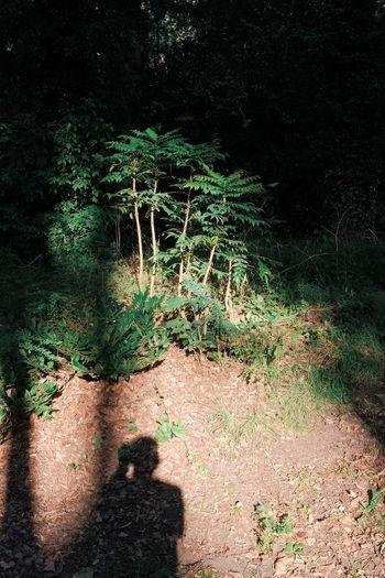 Shadow of tree on footpath at night