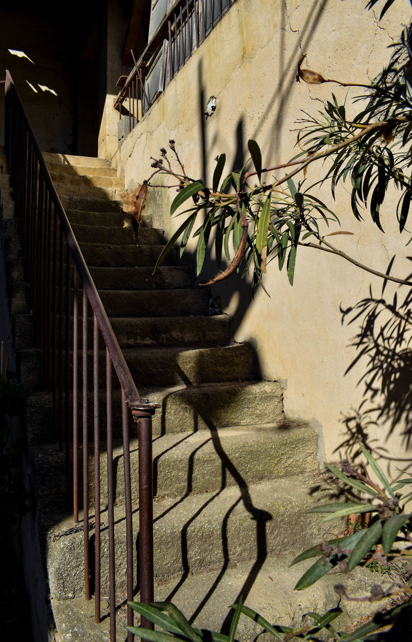 architecture, steps, built structure, steps and staircases, staircase, house, building exterior, growth, stairs, plant, shadow, no people, outdoors, day