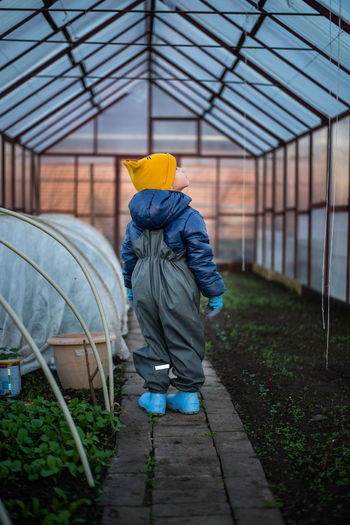 Rear view of boy standing in greenhouse