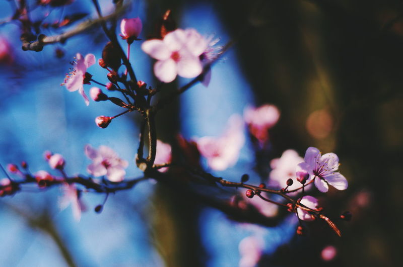 Shots found on my Pentax Flower Fragility Springtime Nature Blossom Tree Branch Beauty In Nature Growth No People Close-up Twig Day Freshness Outdoors Plant Flower Head Sky The Week On EyeEm