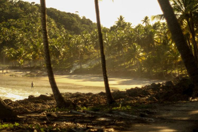Jeribucaçu beach Bahia/brazil Vacations Tree Water Beach Sunlight Tree Trunk Sky Landscape Coconut Palm Tree