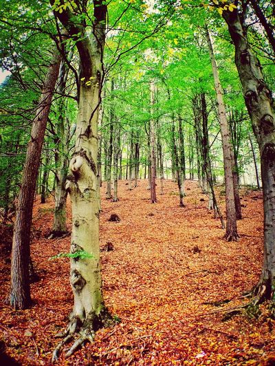 the great outdoors! TreePorn Landscape_Collection Nature_collection