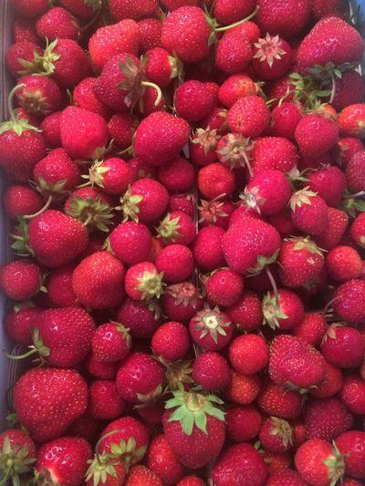 Fraises Strawberries Rouge Red Summer Été Saturation Farmer's Market Au Marché Quebec Fraises Bio Du Québec Organic Québec Strawberries Food Food Porn Fruits