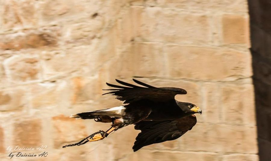 Velocidad .... / Speed...... Streamzoofamily EyeEm Best Shots EyeEm Birds Eyeem Fauna