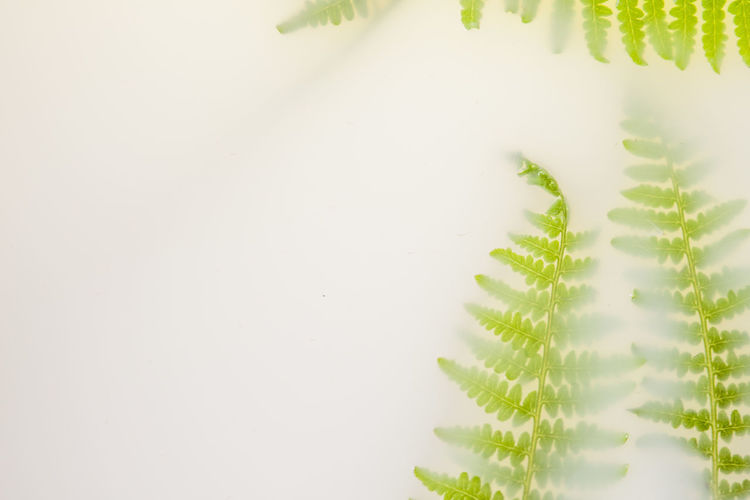 High angle view of fresh green plant against white background