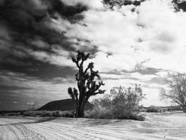 Desert sky and Joshua Tree Sky Cloud - Sky Nature Tree Outdoors Tranquility California Dreamin Beauty In Nature