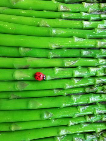 Aspargus Season  Springtime Backgrounds Full Frame Red Ladybug Close-up Green Color Bug