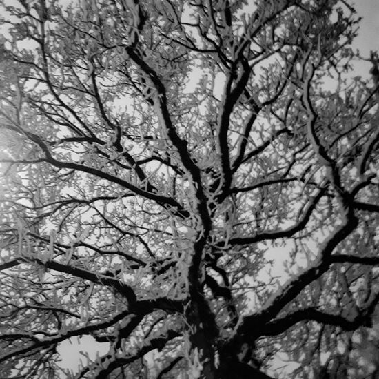Snow On The Trees Snow Blackandwhite Blackandwhite Photography Tree Branch Nature Beauty In Nature Bare Tree No People Outdoors Freshness