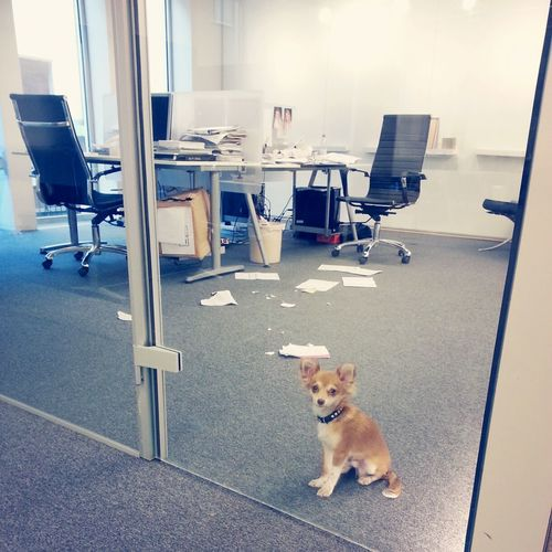 Busy day at the office, as always... Funny Dog Hard Work Office Career