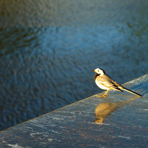 Beauty In Nature Bird Close-up Day Focus On Foreground Nature No People Russia Tyumen' Water