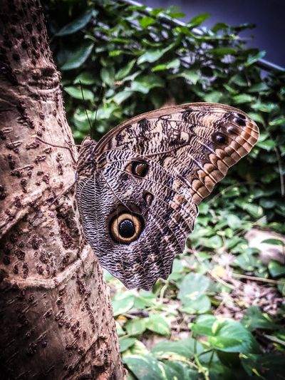 Butterfly Tree Insect Butterfly Animal Themes One Animal Animal Animals In The Wild Animal Wildlife Close-up Day Nature No People Plant Focus On Foreground Vertebrate Beauty In Nature Animal Markings Outdoors Animal Wing Growth