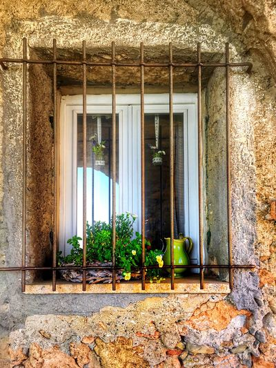 Flower Window Architecture Built Structure Building Exterior Window Building Plant No People Green Color