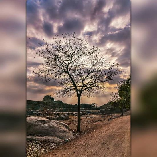Cloud - Sky Cloudscape Tree Sunset Sky Landscape Outdoors Scenics Branch Fragility Bare Tree Nature EyeEm Nature Lover TCPM