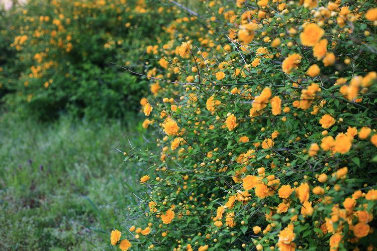 View of orange flowering tree