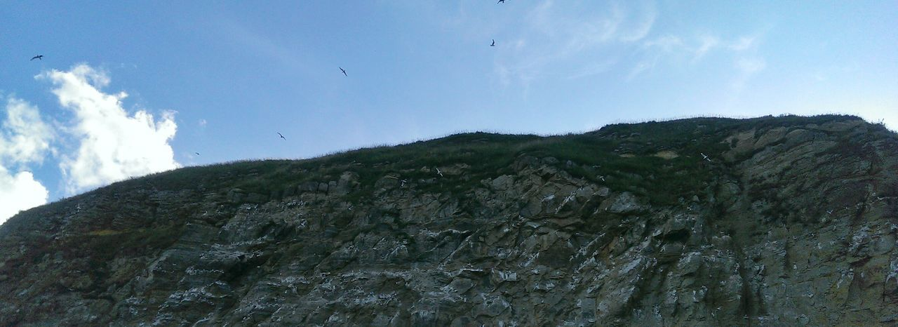 Taking Photos HTC One Birds Cliffside
