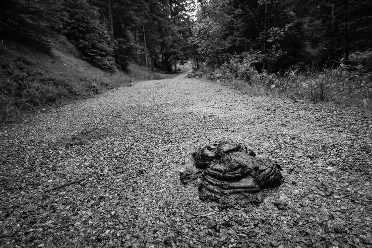 Heap of cow dung on a footpath Allgäu Bavaria Footpath German Path Alps Animal Themes Cow Dung Cow Manure Day Dung Fertiliser Germany Grass Heap Manure Nature No People One Animal Outdoors Shitzu