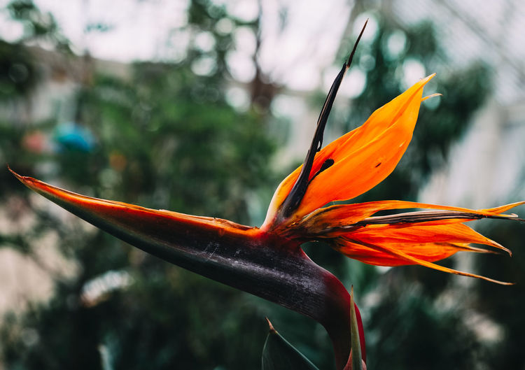 EyeEm Nature Lover Flowering Plant The Great Outdoors - 2018 EyeEm Awards Beauty In Nature Botany Close-up Flower Flower Head Flowering Plant Focus On Foreground Fragility Freshness Growth Inflorescence Nature Orange Color Petal Plant Vulnerability