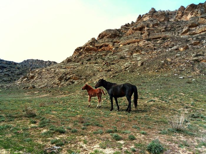 Animal Themes Horses Mammal Animals In The Wild Animals Nature Beauty In Nature Landscape Outdoors No People Day Dagestan LeTv X600 LeEco