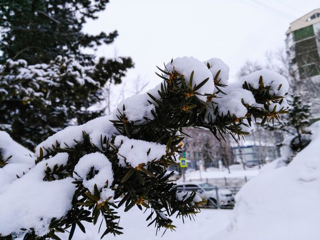 Snow Winter Cold Temperature Tree Pinaceae No People Frozen Nature Pine Tree Outdoors Snowing Mountain Christmas Day Snowflake Close-up Adventures In The City