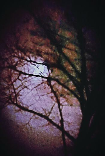 Tree night Moon Nacht Takken Boom mysterie Luna Mysterious