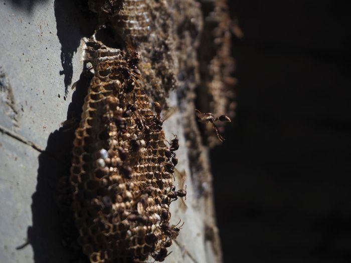 Close-up of beehive on wall