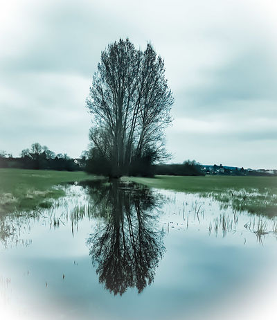 Reflection Tree Water Nature Landscape Sky Outdoors Cloud - Sky Reflection Lake No People Nature On Your Doorstep Nature Photography Naturelovers EyeEm Best Shots - Nature Grassland Grass Weather EyeEm Nature Lover Close-up Freshness Green Color Light And Shadow Shadow Play Shadows & Lights EyeEm Best Shots