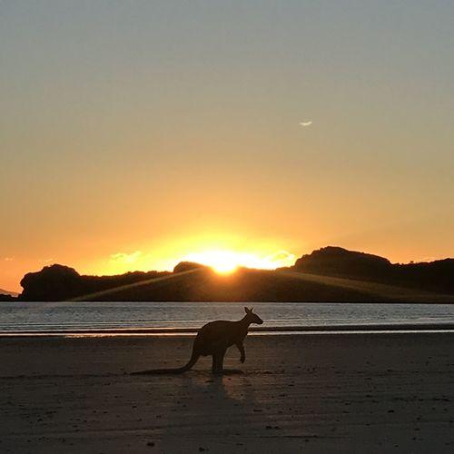 Sunrise Aussie