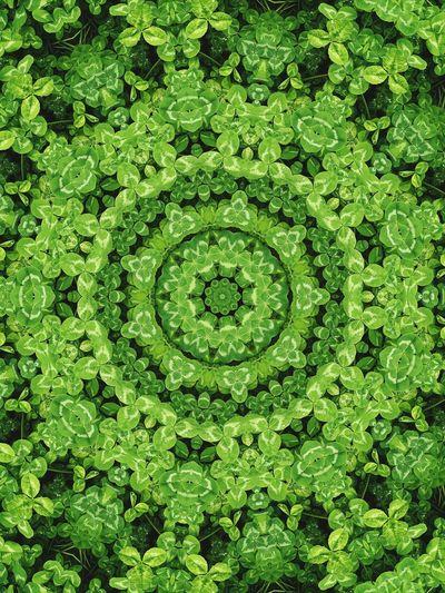 生活中有太多太多奇妙的东西在等着我们去发现,换种方式,观世界 Green Color Backgrounds Full Frame Pattern No People Nature Day Close-up Concentric Outdoors first eyeem photo