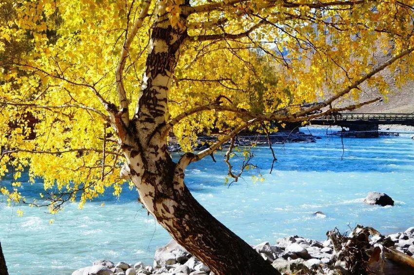 I like here ,xinjiang Tree Nature Tree Trunk Beauty In Nature Water Scenics Autumn